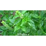 Semillas Plantas Aromaticas Albahaca Jardin Flores 200uds.
