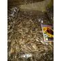 Alimento-racion Girasol Grande, Girasol Chico Y Pelado