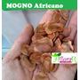(100) Sementes Mogno Africano # Para Mudas 100%frete Grátis!