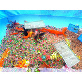 Karpas - Goldfish - Varios Aguas Frias