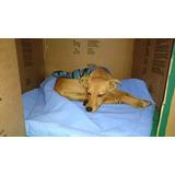 Perro Macho Rescatado De 6 Meses En Adopción!