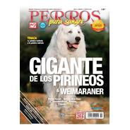 Perros Pura Sangre. Gigante De Los Pirineos Y Weimaraner.