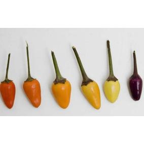 Chile Arcoiris 15 Semillas Hortaliza Planta De Sol Sdqro