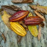 Frutas De Madera Para Decorar, Cacao (precio Hasta 15/3/18)