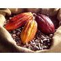Amêndoa Cacau Natural Sementes Secas P/ Chocolate - 4kg