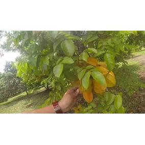 20kg Fruta Carambola De Primera Con Envio Gratis Todo Mexico
