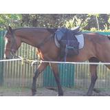 Caballo Manso, Andar, Equitación O Salto