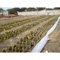 Proyecto De Inversion Nopales En Invernadero