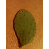 .cactus, Cactáceas Suculentas Nopal,tunas,pencas,tuna Morada