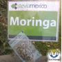 Semilla Del Arbol De Moringaoleifera De Producción Orgánica