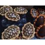Huevos De Pascua Animal Print Relleno C/bombones Y Caramelos