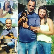 Lindos Filhotes De Rottweiler Vacinados, 2 Unidades