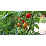 Kit Proyecto Aprende Hacer Huerto En Jardín Cultivo Siembra