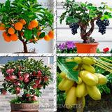 Sementes De Frutas Anãs Para Vasos E Mudas - À Sua Escolha