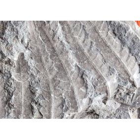Fósil Hoja Planta En Matriz Roca Mineral De Colección Joya3
