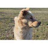 Lucio Cachorro Menos De Un Año, Precioso Adopcion Gratis