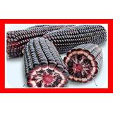 Milho Roxo Peruano - Sementes Para Mudas
