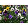 3kg Tierra Negra Organica Preparada Para Plantas Y Florales
