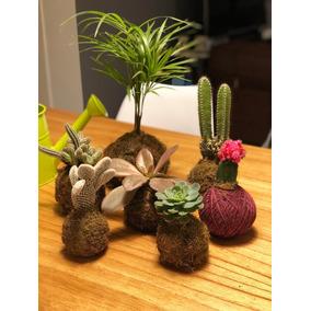 Kokedama Con Cactus Y Suculentas - Deco - Oferta!
