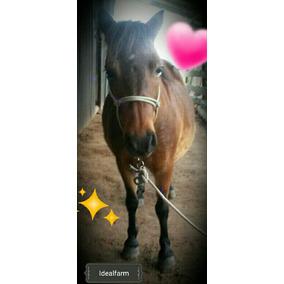 Pônei Fêmea - Idealfarm - Mini Horse - Dia Da Criança