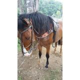 Vende - Se Cavalo Mangolino