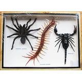 Verdadero Gigante Escorpión Taratula Y Ciempiés Insectos Tax