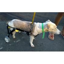 Cadeira De Rodas Para Cães - Pequena Melhor Custo Benefício