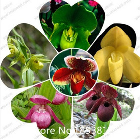 30 Sementes De Lindas Orquídeas Sapatinhos Mais 36 Espécies*