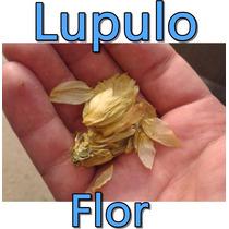 Flor De Lupulo Humulus Lupulus Cerveza Artesanal Birra