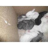 Conejos Bebes Gazapos Para Regalar Hermosos!!