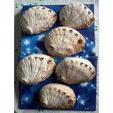 Concha Do Mar Abalone