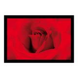 Quadro Floral 100x70 Com Moldura - Grande Rosa Vermelha Foto