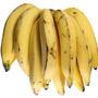 Muda De Banana Da Terra Rizoma