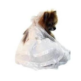 Vestido De Noiva Para Cachorra Tamanho Pp