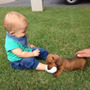 Salchichas Miniatura. Cachorros Dachshund Papá Inscrito Kcc