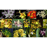 Oferta Combo 10 Orquídeas Nativas + Fertilizante De Regalo