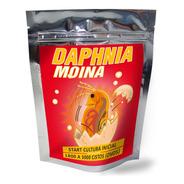 Cistos Ovos Moinas / Daphnia / F.grátis - 1800 A 3000 Ovos