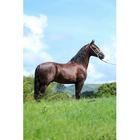 Cobertura De Cavalo Mangalarga Machador Linhagem D2