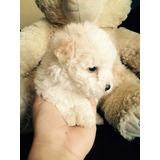 Perritas Poodle Mini Toy