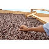 Cacao Seco 100% Tabasqueño 1kg Tecnica Beneficiado