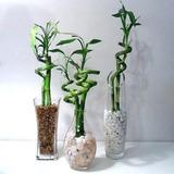 Caña Vara Bambu Lucky Suerte Artificial 1,20 Mts! Romaweb