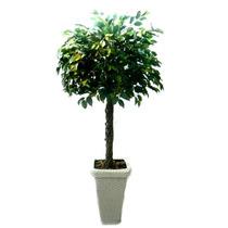 Arvore Ficus 1,80cm Plantas Artificiais Decoração 465036