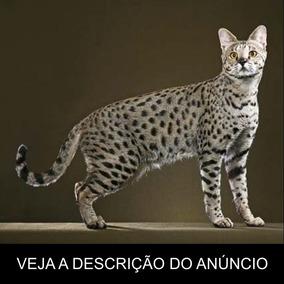 Gato Savannah - Tudo Sobre A Raça (frete Grátis) Promoção!
