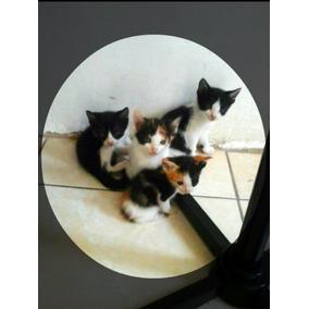 Gatos Filhotes Doação