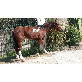 Egua 7/8 Argentina