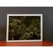 Quadro Fotográfico Folhas - 30 X 40 Cm - Moldura Branca
