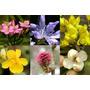 Flores De Bach Frasco 30ml Formula Preparada !!