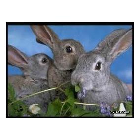 Corrida Financiera Cría Y Engorda De Conejos