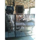 Gaiola Canil Para Cães E Gatos 6 Lugares
