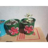Suculentas Y Cactus Enanos